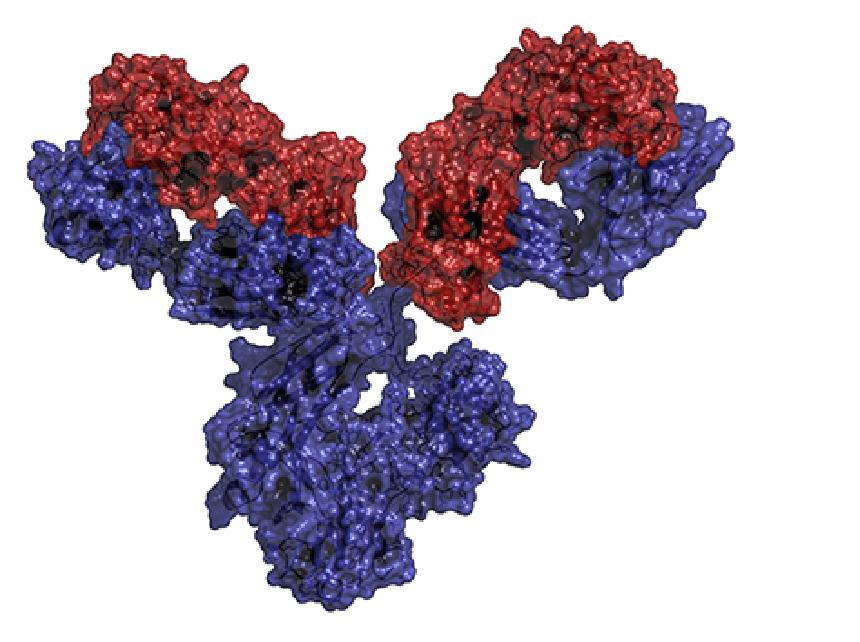 antibody_1.png